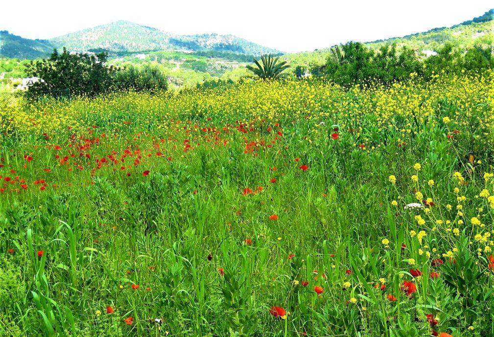 cropped-foto-paisaje-2.jpg